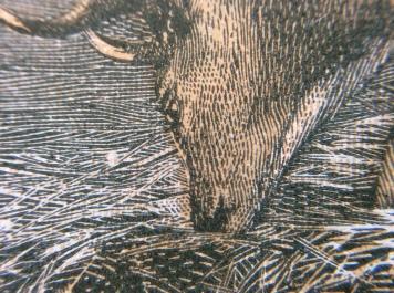 Deer close up Moilick